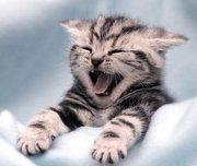 cute kitten for nice homes
