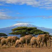 24/7/365 Climbing Kilimanjaro Via Machame Route 2015